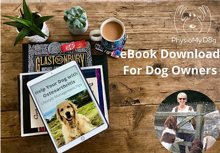 What Owners can do to help with their dogs with osteoarthritis