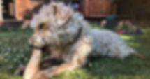 Dog Chewing Marrow Bone in Garden.jpg