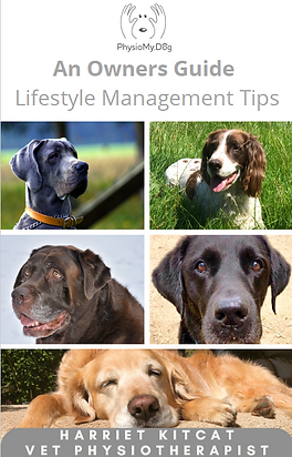 PhysioMyDog Lifestyle Management Tips