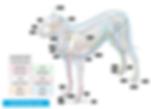 animal dog reiki