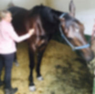 animal horse reiki