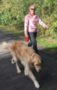 Dog Walking on lead