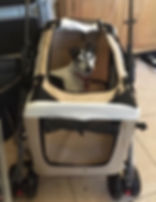 Buggy for Dog with OA.jpeg