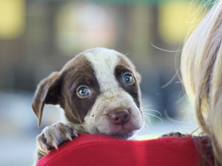 Heartland Animal Shelter Receives SBB Research Group Grant