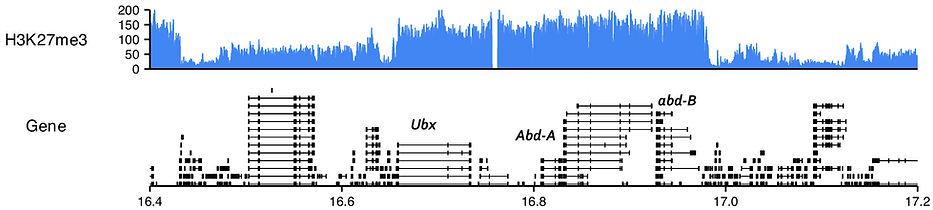 H3K27_BX-C_S2.jpg