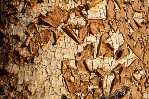 Boab-Tree-Bark-Abstract.jpg