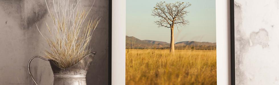 Boab-Tree-Gary-Annett.jpg
