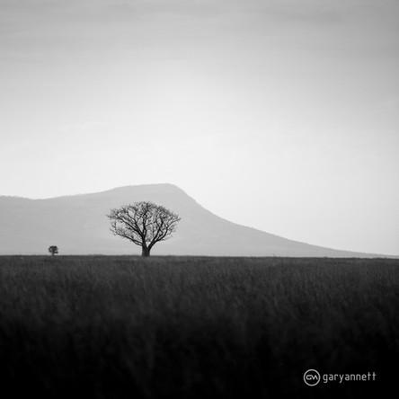 Boab-Tree-East-Kimberley.jpg