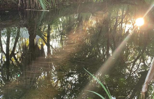 Morning Reflections...