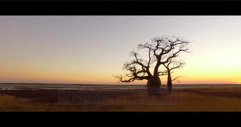 Boab-Trees-01