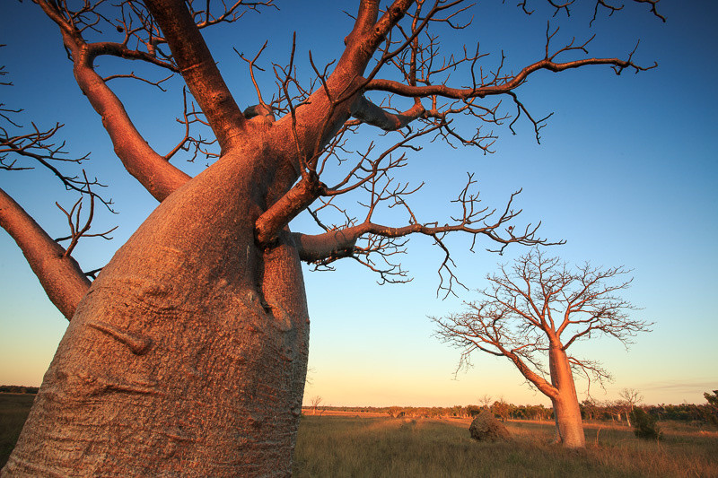 Kimberley-Boab-Trees-Gary-Annett-1