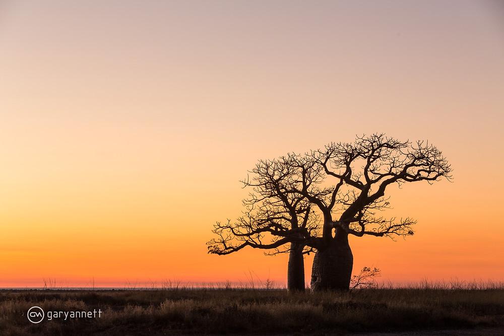 Boab-Tree-Kimberley-Gary-Annett