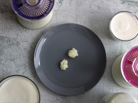 Kefirna zrnca (srca) mliječnog kefira - Milk kefir grains (hearts)