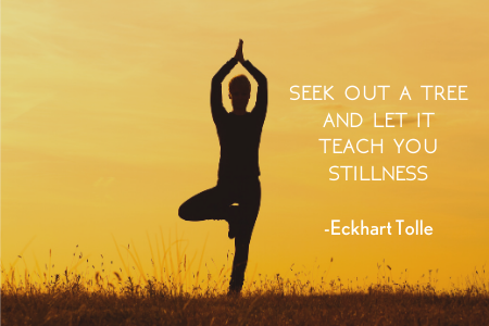 Seek out a tree and let it teach you stillness by Eckhart Tolle