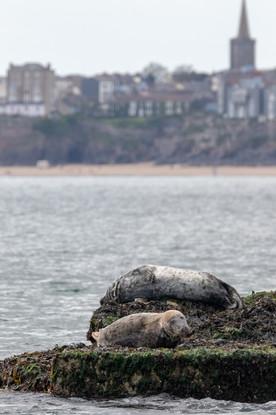 Seals off Shore