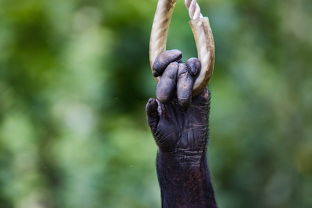 Chimp Eden, South Africa