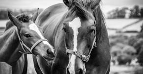 4 bezcenne korzyści z kontaktu z końmi dla twojego dziecka!