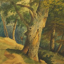 """Anonyme """"Vue d'une forêt"""""""