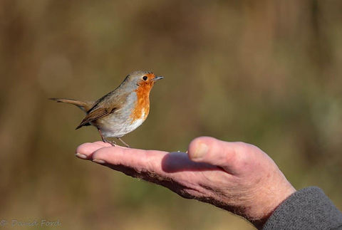 Robin 2 (1 of 1).jpg