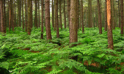 ferns forest Reusel