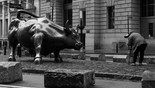 Charging Bull. March 28th. 2020