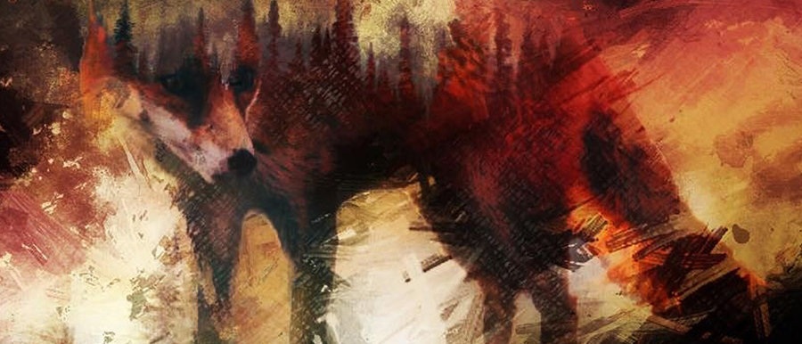 Fox Canvas