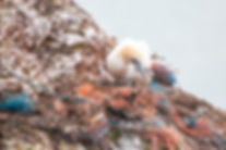 birds plastic wormify.jpg