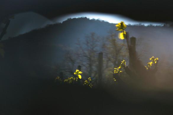 Fabien Leduc Photographe Vendanges 2019