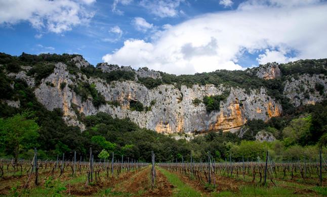 Domaine viticole du Pont D'arc vue vignes