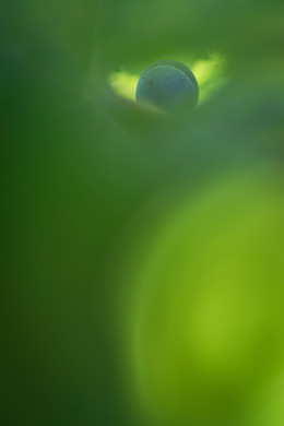 Fabien_leduc_Photographe-velay-scop-extg