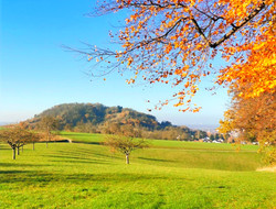 #Hemsberg#odenwaldistschoen#wanderfuehre