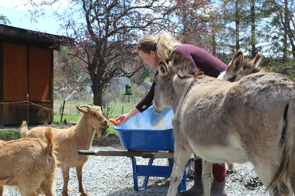 While you may have heard of an emotional support dog, emotional support goats and donkeys tend to be a little more rare. However, whether there are hooves or paws at the end of their feet, Sarah Harris saw the effect a furry friend can have when she was helping herself and her children deal with the trauma of seeking the services of a local women's shelter. Now she's inviting women and children from the same shelter to Willowpark Farm in Edelweiss. Stuart Benson photo