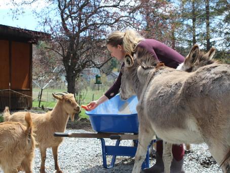 Emotional support ... donkeys?