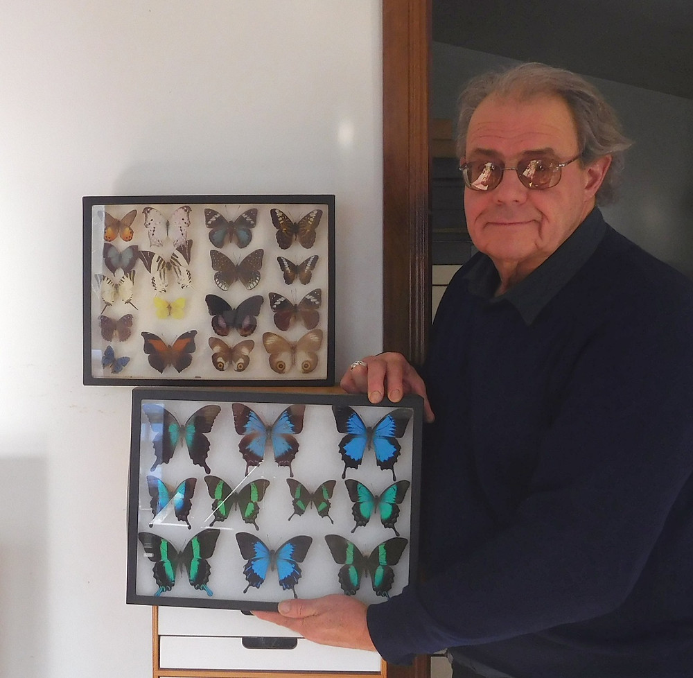 John Urban has been collecting butterflies and moths, and has preserved numerous species, which have since disappeared or become extremely rare. He uses his skills as a jeweler for the delicate work of mounting the insects he has collected so they can be displayed, carefully moving wings, legs and antenna, and setting them into a position they will retain after they dry out. Photo courtesy John Urban