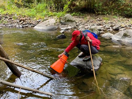 Freshwater mussels found in Chelsea Creek