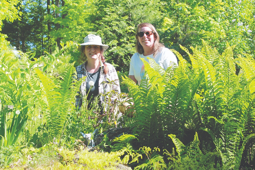 Celine Perrier (right) and Suzi Jensen have nearly 35 years of combined experience foraging around the Hills. Thanks to Perrier's wild garden, which includes naturally occurring violets, fiddlehead ferns, and wild ginger, they can collect much of their daily food staples from Perrier's front yard. Stuart Benson photo