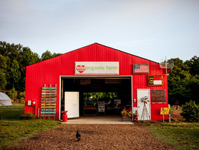 11 farms outside of Fort Mill to discover this fall