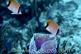 Ecobuzos Los Roques 55.jpg