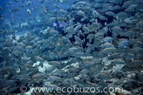 Ecobuzos Los Rqoues 62.jpg