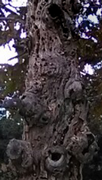 treemary.png