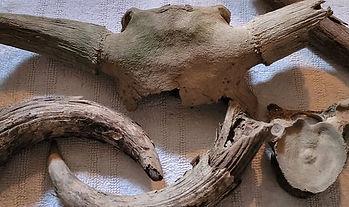 Stones&Bones1.jpg
