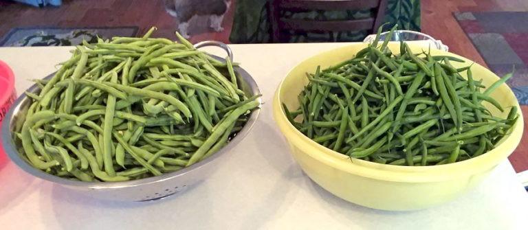 greenbeans2august2019-768x335.jpg