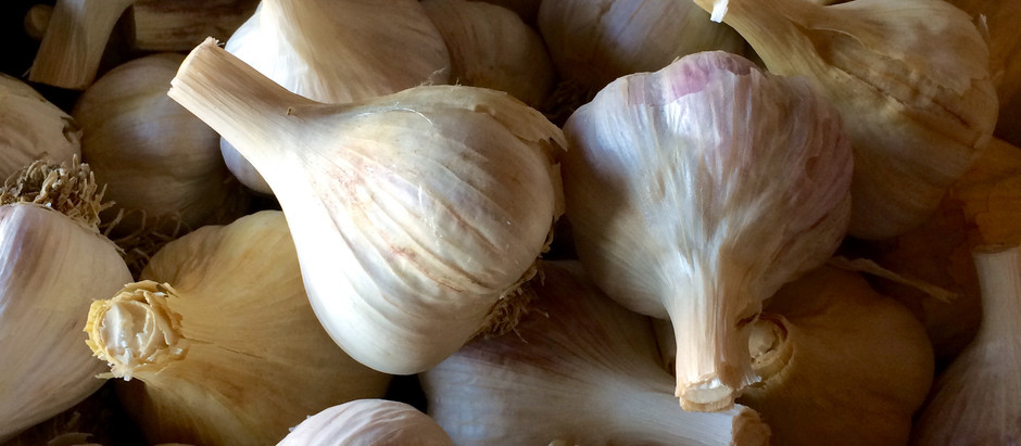 TMD Podcast S2 E2: All About Garlic!