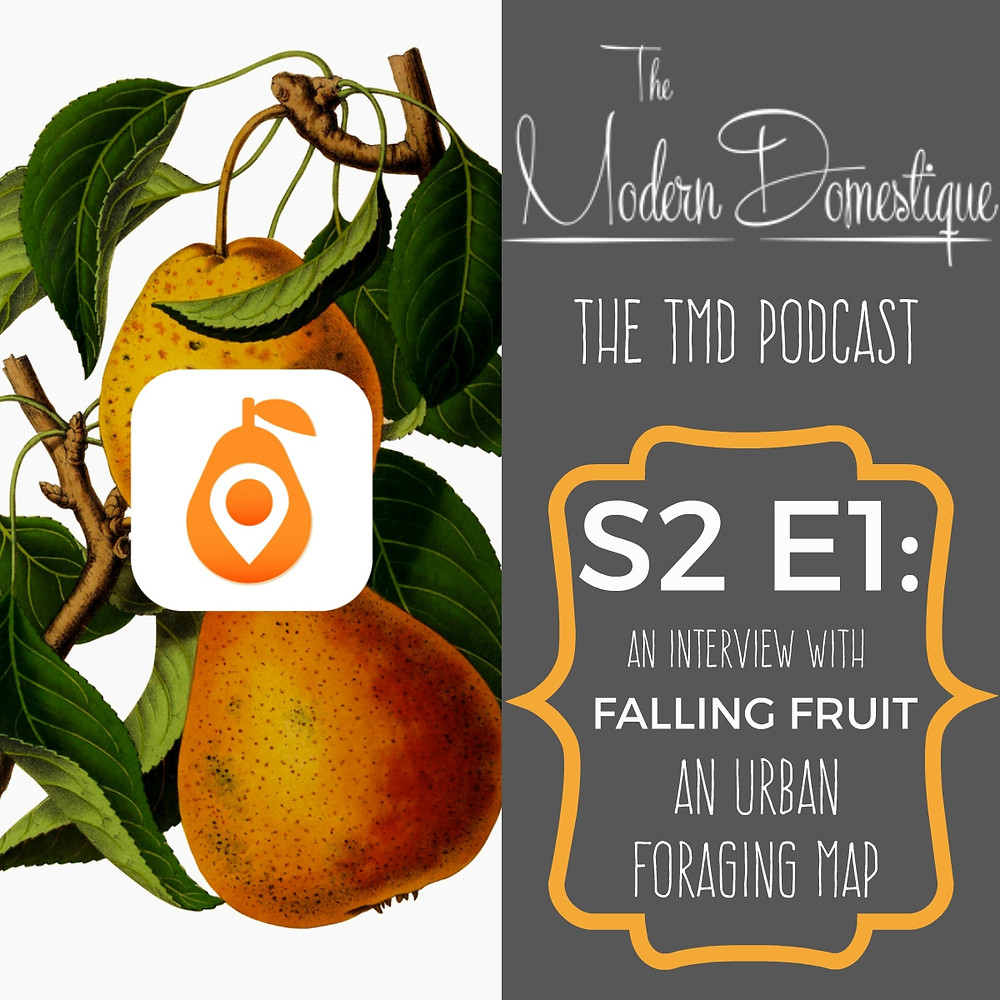 Have you ever wondered about the fruit growing in public spaces around your city? Would you like to get to know your city better while eating seasonal fruit at no cost? Tune in as I interview Ethan from Falling Fruit, an online interactive foraging map!