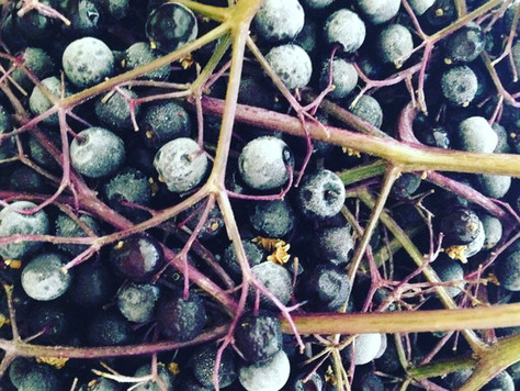 Elderberry Immune-Boosting Tonic