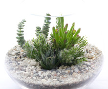 Small Succulent Fishbowl