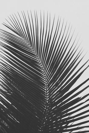 BRASILIEN_2018_0403-28.jpg