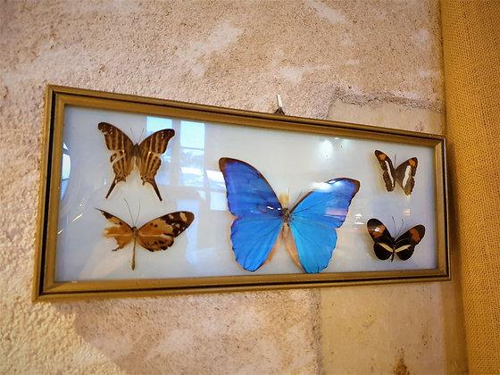Cadre à papillons vintage