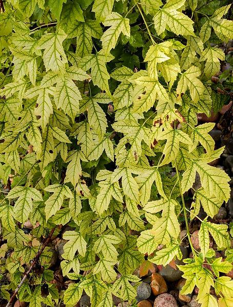 sick leaves.jpg