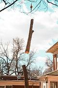 branch being lowered.jpg
